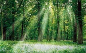 les-stromy_